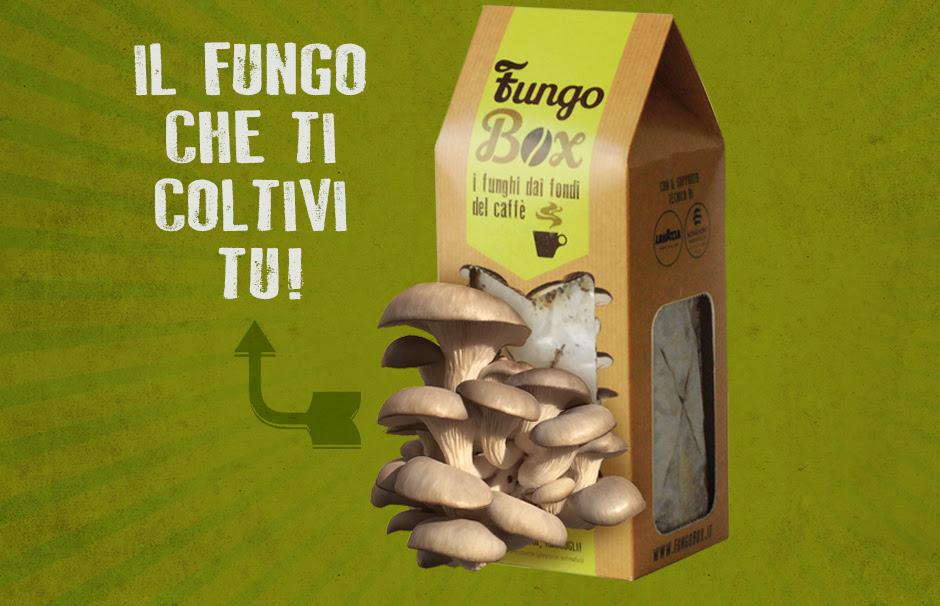 FungoBox